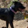 Baby perra adopcion palevlas 02