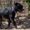 Baby perra adopcion palevlas 03