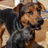 Ben perro adopcion palevlas 02