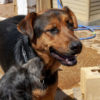 Ben perro adopcion palevlas 03