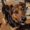Ben perro adopcion palevlas 04
