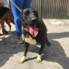 Bruce perro adopcion palevlas 03