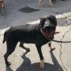 Bruce perro adopcion palevlas 04