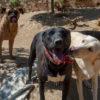 Bruce perro adopcion palevlas 05