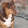Canela perra adopción palevlas 04