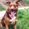Canela perra adopcion palevlas 01