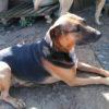 Chip perro adopcion palevlas 02