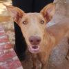 Dolar perro adopcion palevlas 02