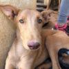 Dolar perro adopcion palevlas 03