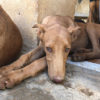 Dolar perro adopcion palevlas 04