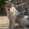 Dos perro adopcion palevlas 01