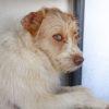 Dos perro adopcion palevlas 02