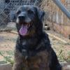 Filio perro adopcion palevlas 02