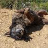 Filio perro adopcion palevlas 03