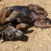 Filio perro adopcion palevlas 04