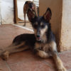 Holly perra adopcion palevlas 02