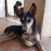 Holly perra adopcion palevlas 03
