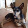 Holly perra adopcion palevlas 04
