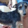 Holly perra adopcion palevlas 05