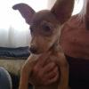 Kuki perro adopcion palevlas 01