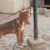 Kuki perro adopcion palevlas 03