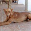 Mandy perra adopción palevlas 02