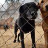 Nero perro adopcion palevlas 3